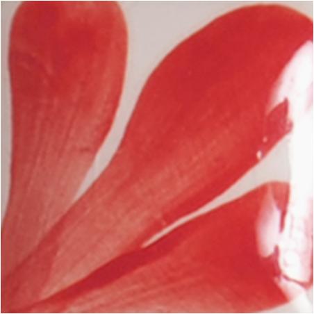 OS069 PRISM RED flacon de 30 ml