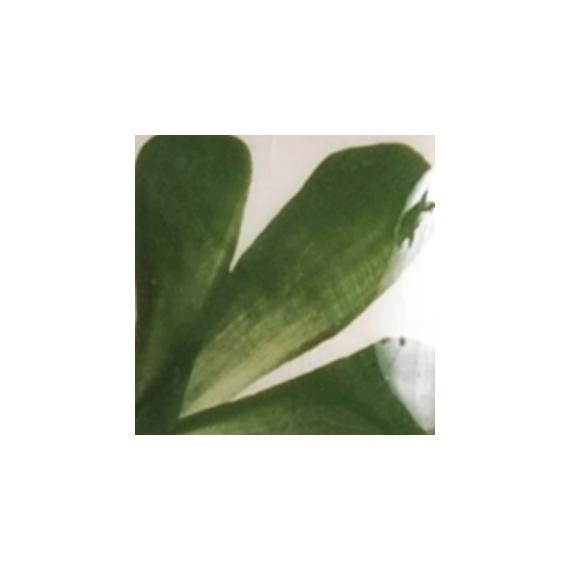 OS125 LEAF GREEN flacon de 30 ml